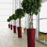 Delta Planter with Open Braid Ficus