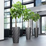 Diamante Planter With Pachira Plant