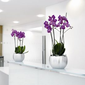 Orchids in Orbit Bowls