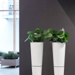 Primus Combi Planter with Calathea Plant