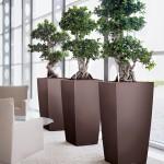 Lechuza Cubico planter Bonsai
