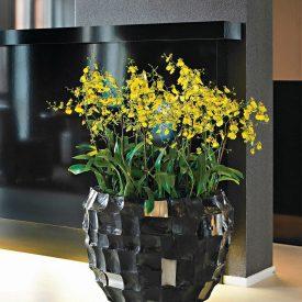Oncidium in Shell planter