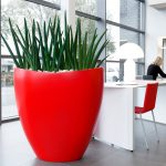 Ovation Planter with Sansevieria Stuckyi Plant