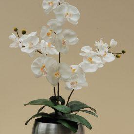75cm triple white orchid al