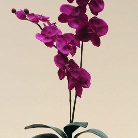 Double purple Orchid in aluminium bowl