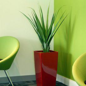 Green Aloe LE30 Scarlet
