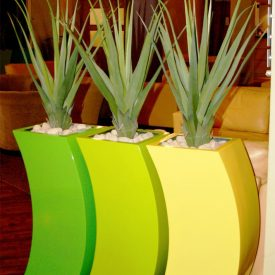 Green Aloe in RAL colour curvy