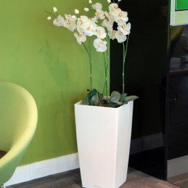 Orchid x 4 LE30 White