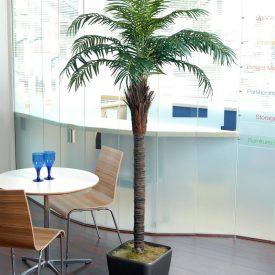 Phoenix Palm QR43 Graphite