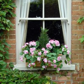 Pink Geranium Window Box PT3