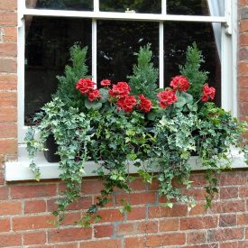 Red Geranium Window Box PT2