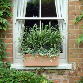 Sorghum Grass Window Box PT4