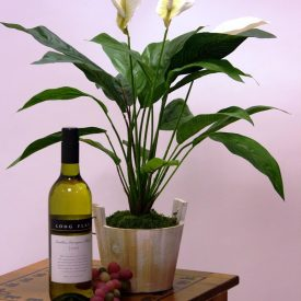 Table Top Peace Lily