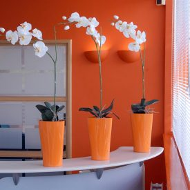 White Orchid Delta 21 Orange