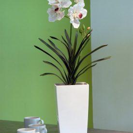 White Orchid Maxi White