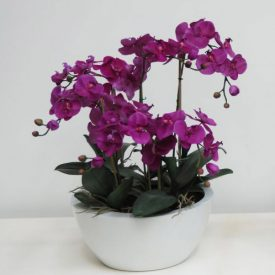 orchids purple in large white bowl