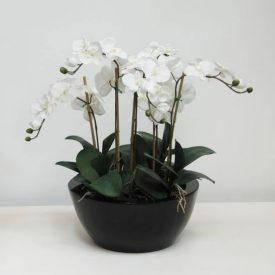 orchids white in large white bowl
