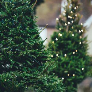 Christmas Tree 1149919 960 720 (1)