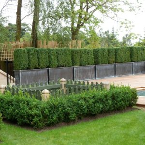 Buxus Hedging 2 1024x768