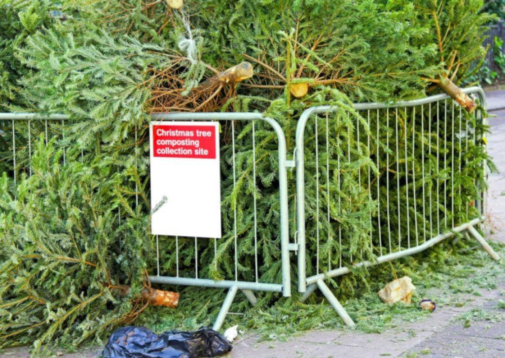 Xmas Tree Compost