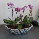 Office Plants London 2