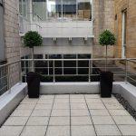 Office Plants Glasgow (1)
