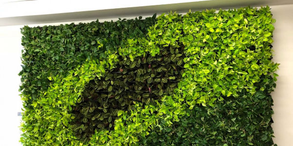 Living Wall And Moss