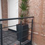 Lancaster Mill Live Plants (4)