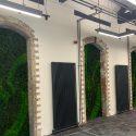 Lancaster Mill Live Plants 6