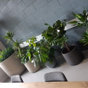 Office Plants Solihull (1)