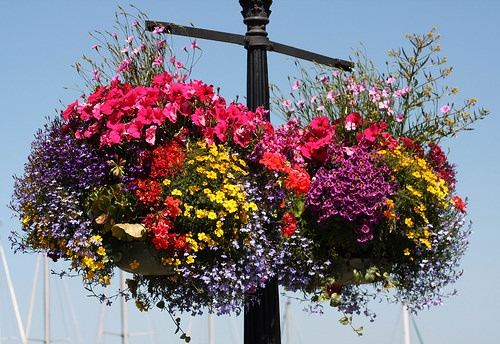 Hanging Baskets Featured
