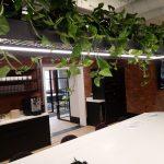 Hanging Plants Refurbished Building2
