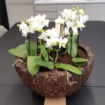 Office Plants Install Manchester (2)
