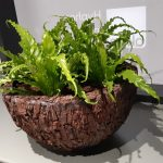 Office Plants Install Manchester (4)
