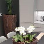 Office Plants Install Manchester (6)